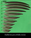 pera křídla rorýse